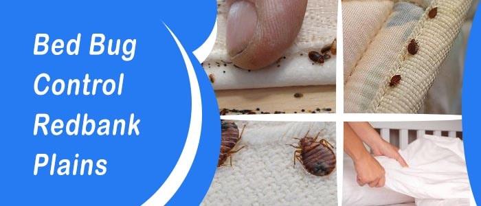 Bed Bug Control Redbank Plains