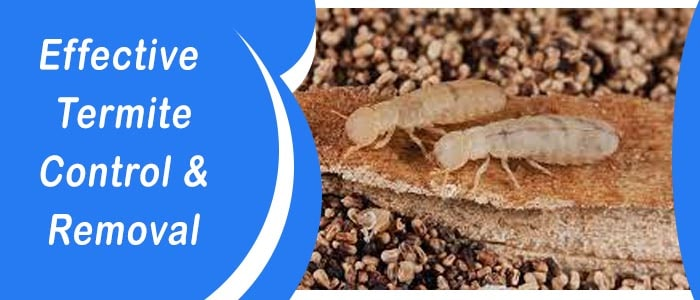 Effective Termite Control & Removal