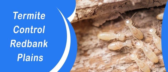 Termite Control Redbank Plains